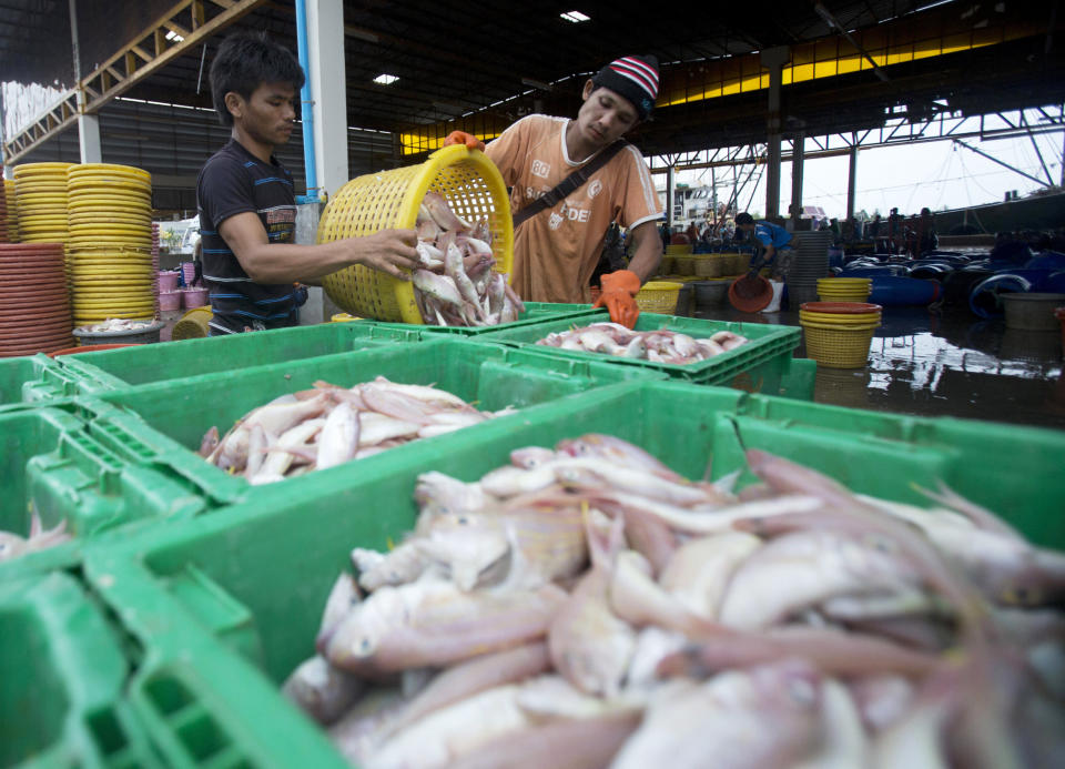 FILE - In this June 20, 2014, file photo, migrant workers separate freshly caught fish by size at a fish market in Samut Sakhon Province, west of Bangkok. Thailand reported more than 500 new coronavirus cases on Saturday, Dec. 19, 2020, the highest daily tally in a country that had largely brought the pandemic under control. (AP Photo/Sakchai Lalit, File)