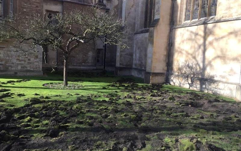 The lawn of Trinity College is seen after being dug up by Extinction Rebellion climate protesters, in Cambridge - Reuters