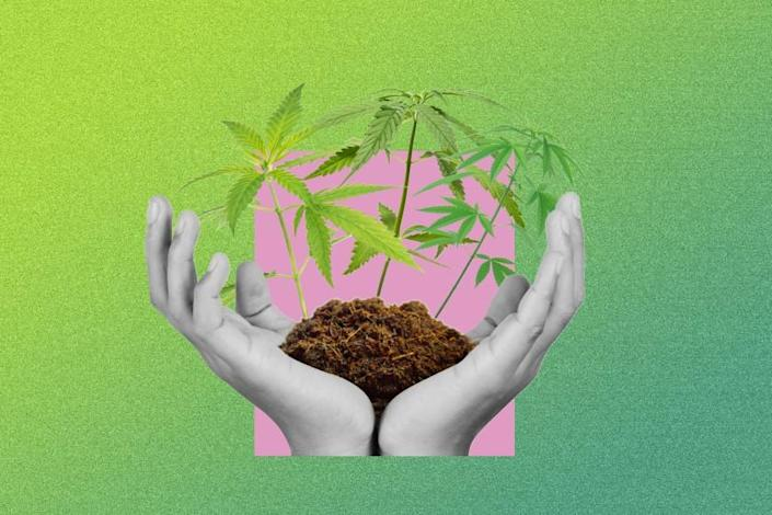 Graphic of hands holding soil with marijuana plants springing out of the soil.