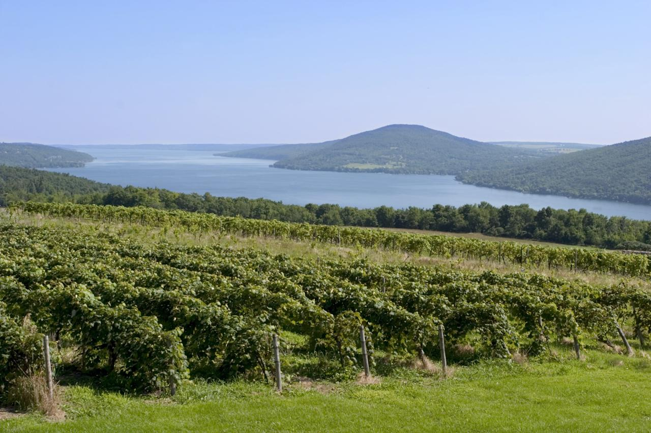 """Boasting more than 100 wineries, the Finger Lakes region of New York specializes in producing white wines, such as Riesling and Gewürztraminer. Treat yourself to one of <a rel=""""nofollow"""" href=""""http://www.fingerlakeswinecountry.com/wine-food/wine-trails/"""">three signature wine trails</a> in the region and enjoy the picturesque landscapes and inviting waters. Local favorites include <a rel=""""nofollow"""" href=""""https://lamoreauxwine.com/"""">Lamoreaux Landing Wine Cellars</a> and <a rel=""""nofollow"""" href=""""http://www.ravineswine.com/"""">Ravines Wine Cellars</a>."""