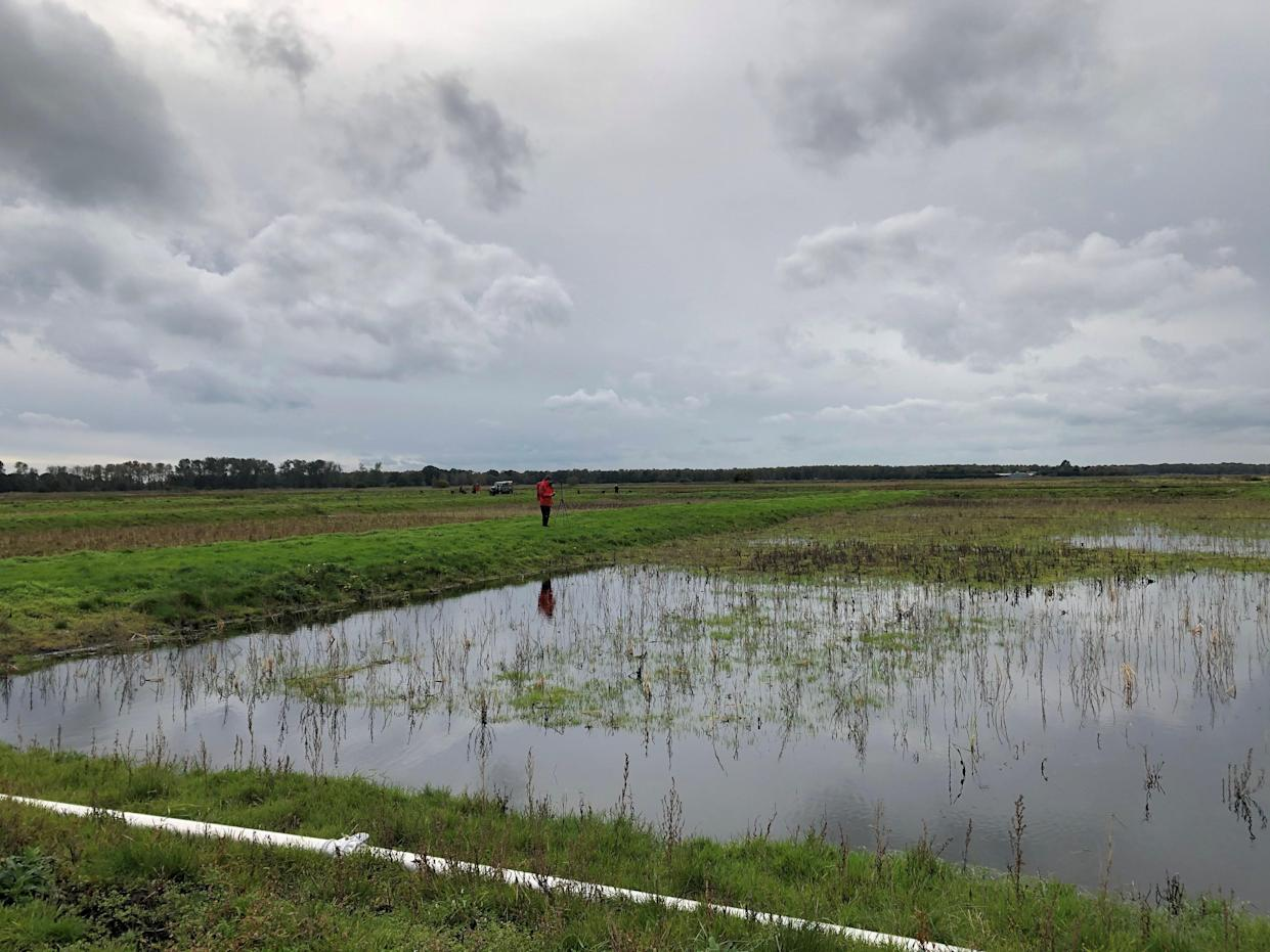 Wet farming, or paludiculture, could provide economic output while protecting peat soils (Emily Beament/PA)