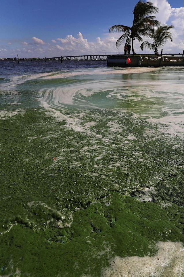 <p>Algae is shown on the St. Lucie River in Stuart, Fla., July 11, 2016. (Photo: Joe Raedle/Getty Images) </p>