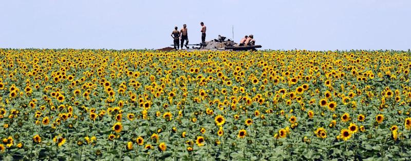 Ukrainian government soldiers sit on an armoured vehicle as they take up a position in a sunflower field south of Donetsk on July 10, 2014 (AFP Photo/Dominique Faget)