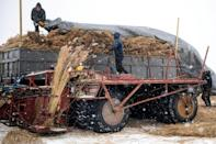 Reed harvesters use specially adapted machinery to gather their crop
