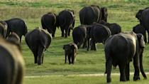 One million animal and plant species face extinction, many within decades, according to a landmark UN report