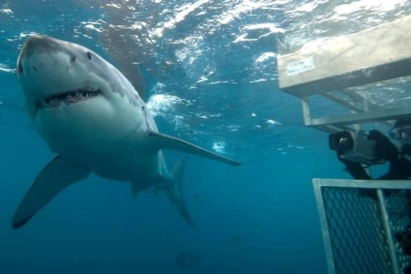Shark expert: Great Whites live in British waters (and it's perfect for them)