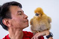 """Eric Woo has been raising ornamental chickens for about a decade and is helping to grow local interest in the hobby via his Facebook group, Fowl Mouthed Friends. Read our story: <a href=""""https://bit.ly/2MV2LlJ"""" rel=""""nofollow noopener"""" target=""""_blank"""" data-ylk=""""slk:https://bit.ly/2MV2LlJ"""" class=""""link rapid-noclick-resp"""">https://bit.ly/2MV2LlJ</a> (PHOTO: Dhany Osman / Yahoo News Singapore)"""