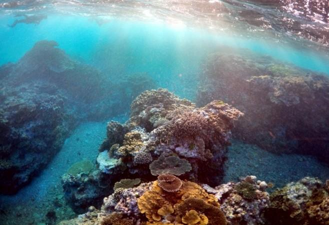 coral reef, great barrier reef, environment, global warming, coral bleaching, mass bleaching,