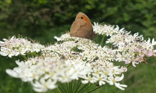 Country diary: the solid gatekeeper of an ancient woodland
