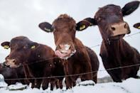 Britain's Met Office warned rural communities could be cut off for days by snowdrifts