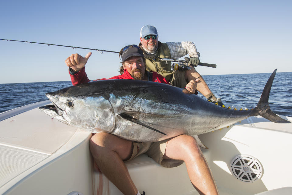 The challenge bluefin tuna face is related to food culture and history.