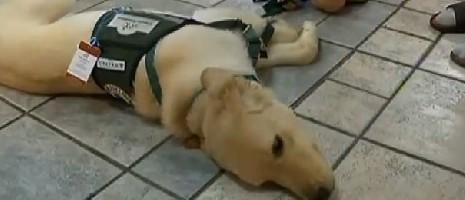 Hotel Refuses Reservation For Family With Service Dog