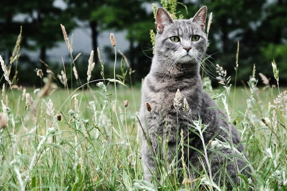 China Cat? Ancient Chinese May Have Domesticated Felines