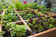 """<p>This highly efficient method divides raised beds into a grid. Vegetables then get planted in one or more squares at a density based on plant size (e.g., you'd plant about 16 radish seeds per square, but only one tomato plant).</p><p><strong>RELATED: </strong><a href=""""https://www.goodhousekeeping.com/home/gardening/a20706747/square-foot-gardening/"""" rel=""""nofollow noopener"""" target=""""_blank"""" data-ylk=""""slk:The Pros and Cons of Square Foot Gardening"""" class=""""link rapid-noclick-resp"""">The Pros and Cons of Square Foot Gardening</a></p>"""
