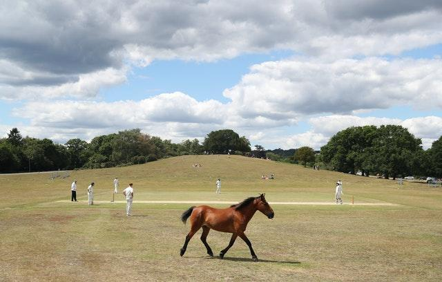 A pony brings play to a halt after wandering on to the field at Lyndhurst and Ashurst Cricket Club in the New Forest. The temporary delay caused by the wild animal came as club cricket matches returned during a summer of disruption caused by Covid-19 . Preparation for the friendly match against Sway at Boltons Bench, near Lyndhurst included players removing droppings from the pitch