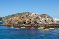 <p><strong>What are we here for?</strong> There's no better way to see Santa Catalina than by kayak. These guided two-hour tours show you everything from the geology and rock formations to the lion fish and leopard sharks. Think of it as an ocean safari.</p> <p><strong>Any standout features or must-sees?</strong><br> You'll see kelp forests, coral, curious harbor seals, and more while paddling along the rugged coastline of Catalina Island in a modern sit-on-top kayak.</p> <p><strong>If money's no object, what option should we choose?</strong> If you're not short on cash or time, splurge on the $109 per person Willow Cove Expedition, which takes about four hours and includes lunch on a secluded beach, snorkel gear, and a top notch instructor.</p> <p><strong>And… what if we're on a budget?</strong> At half the cost, the $54 per person trip to Frog Rock is still a nice adventure, and allows you time to explore the island in other ways, too, like enjoying some craft beers at Catalina Brewing Company. No matter which tour you opt for, you'll be blown away by the wildlife and biodiversity perched on your kayak.</p> <p><strong>Who else comes on these tours?</strong> You'll find coupled up outdoors enthusiasts and families alike, unless you opt for a private excursion.</p>