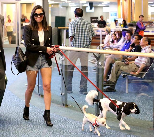 <p>Munn was pretty much rocking the best airport style ever at Vancouver International. Sure, her outfit was cool, but her pups, Frankie and Chance, are what really sealed the deal. (Photo: JKING/BACKGRID) </p>