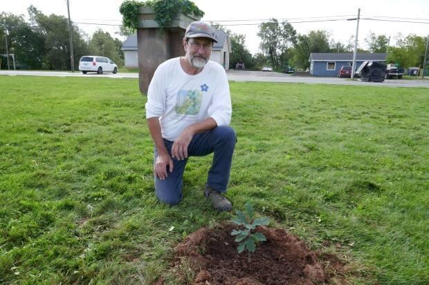 Jim Landry in front of the newest Vimy oak seedling planted at the A.A. MacDonald Memorial Gardens in Georgetown.  (Isabelle Gallant/CBC - image credit)
