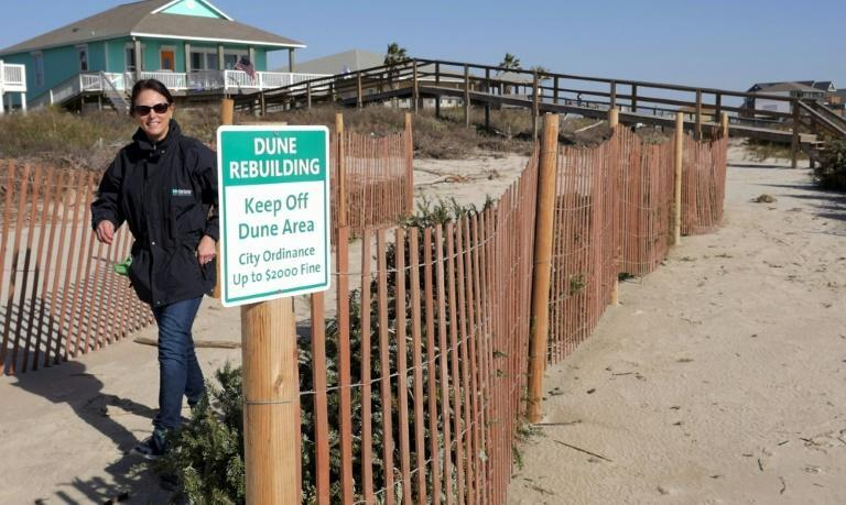 A volunteer walks by a sign about the dune rebuilding program -- using recycled Christmas trees -- in Surfside Beach, Texas