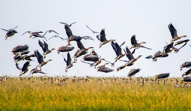 Wildlife populations have been in serious decline as a result of human activity. Photo: Xinhua