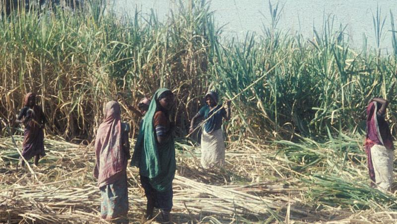 'Womb-Less' Villages of Beed Reveal the Shocking Truth Why Many Women Here Don't Have Uteruses