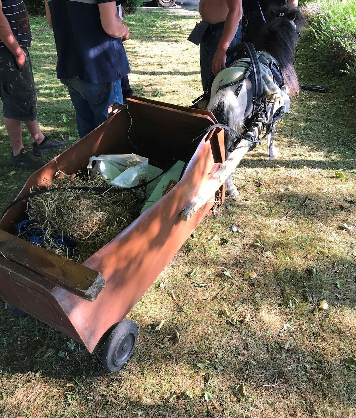 The carriage pulled by the pony was made of a wheelie bin with the front cut away (RSPCA/PA)