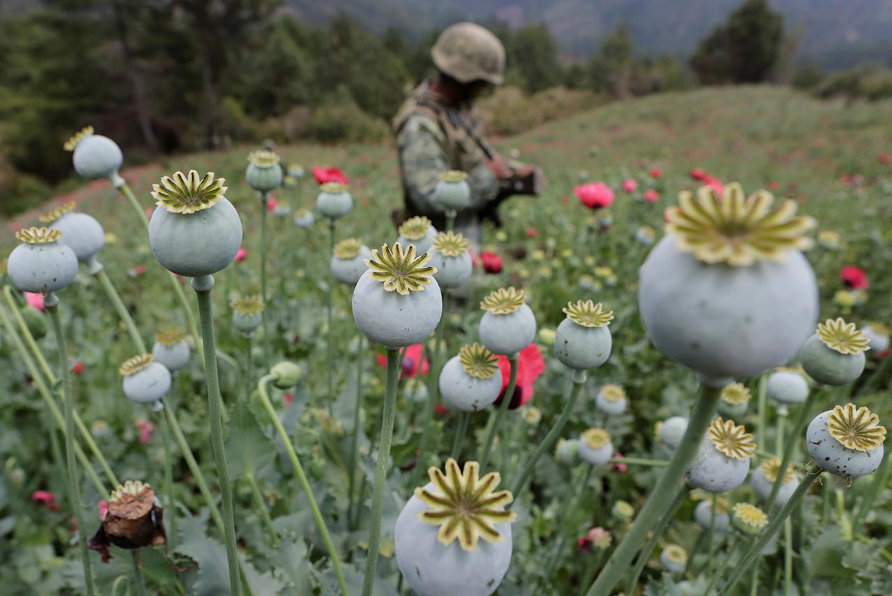 <p>A soldier stands guard beside poppy plants before a poppy field is destroyed during a military operation in the municipality of Coyuca de Catalan, Mexico, April 18, 2017. (Photo: Henry Romero/Reuters) </p>
