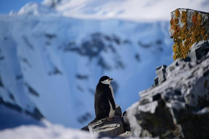 The region is home to a dazzling array of wildlife (AFP Photo/Johan ORDONEZ)