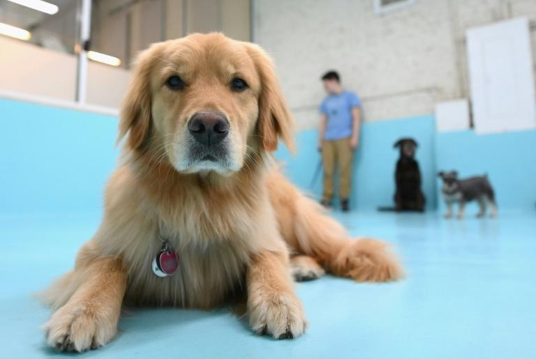 It's a dogs life at 'Biscuits & Bath' day care centres in Manhattan -- but the firm had to lay off most of its staff in March and business is only slowly creeping back