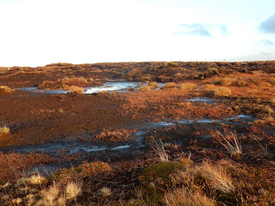Degraded peatland which can emit 30 tonnes of CO2 per hectare per year while the average family car emits just four tonnes of CO2 a year (Beth Thomas/Wildlife Trusts)