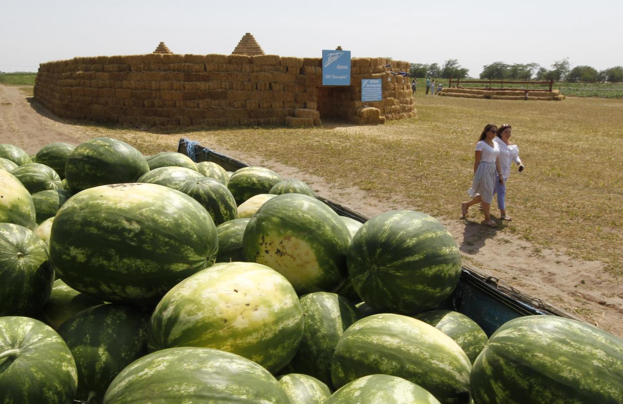 "Watermelons are seen near a soccer stadium at an amusement park, made of straw and erected to attract customers, on the territory of the ""Ponomaryovo"" farming enterprise cultivating melons, watermelons and pumpkins in the settlement of Krasnoye in Stavropol region, Russia July 19, 2017. REUTERS/Eduard Korniyenko"