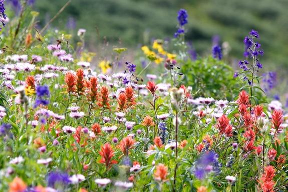 The overall runner-up in the 2013 BMC photo competition depicts a subalpine flower meadow in Colorado.