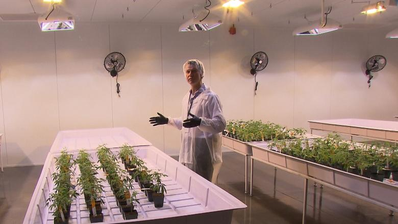 Canadian cannabis producers set their sights on global domination