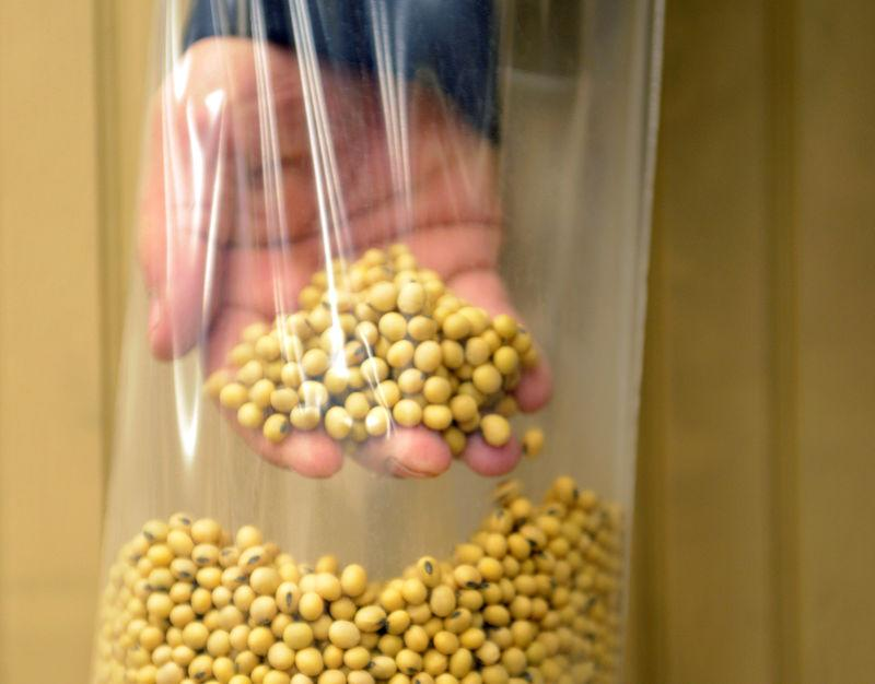 A sample of clean, processed soybeans at Peterson Farms Seed facility in Fargo