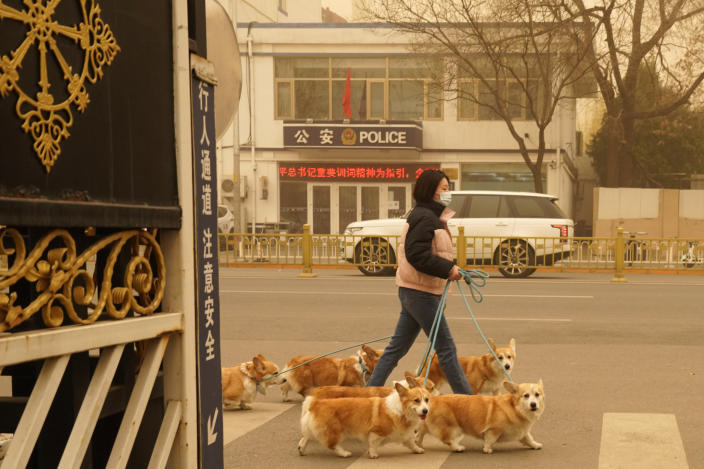 A woman walks her dogs during a sandstorm in Beijing, Monday, March 15, 2021. The sandstorm brought a tinted haze to Beijing's skies and sent air quality indices soaring on Monday. (AP Photo/Ng Han Guan)