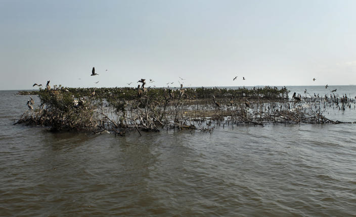 The edge of Cat Island, which has eroded heavily since the Deepwater Horizon oil spill, is seen in Barataria Bay in Plaquemines Parish, La., Wednesday, April 11, 2012. (AP Photo/Gerald Herbert)