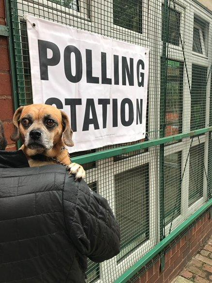 <p>This little guy doesn't look that interested in his local polling station (Twitter/aedholt) </p>
