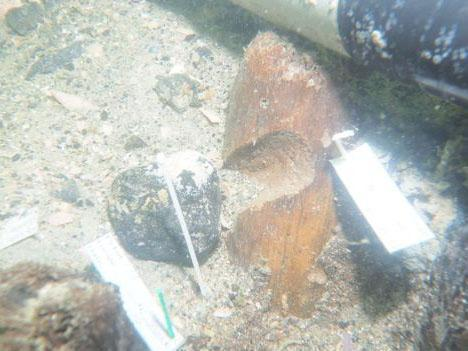 'Unprecedented' 7,000-year-old Native American burial site discovered by amateur diver off coast off Florida