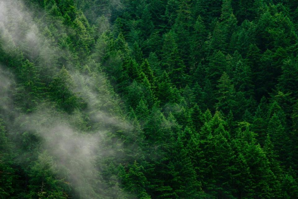 Forest growth can be stunted by noise pollution, study shows