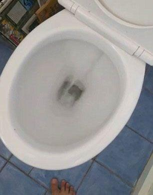 Rat attack: Man finds rodent lurking in toilet bowl