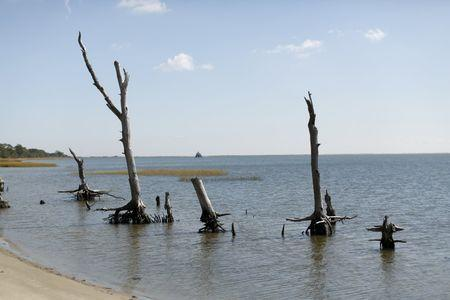 Remains of trees in a coastal ghost forest display rising sea levels on Assateague Island in Virginia, in this October 25, 2013 file photo. REUTERS/Kevin Lamarque