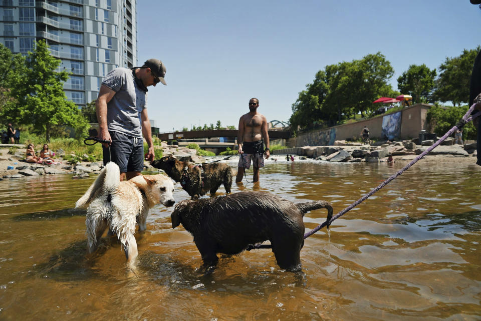 Dogs play in the water at the confluence of the South Platte River and Cherry Creek in Denver, Wednesday, June 14, 2021. By mid-afternoon, the temperature hit 96 degrees as part of the heat wave sweeping across the western U.S. (AP Photo/Brittany Peterson)