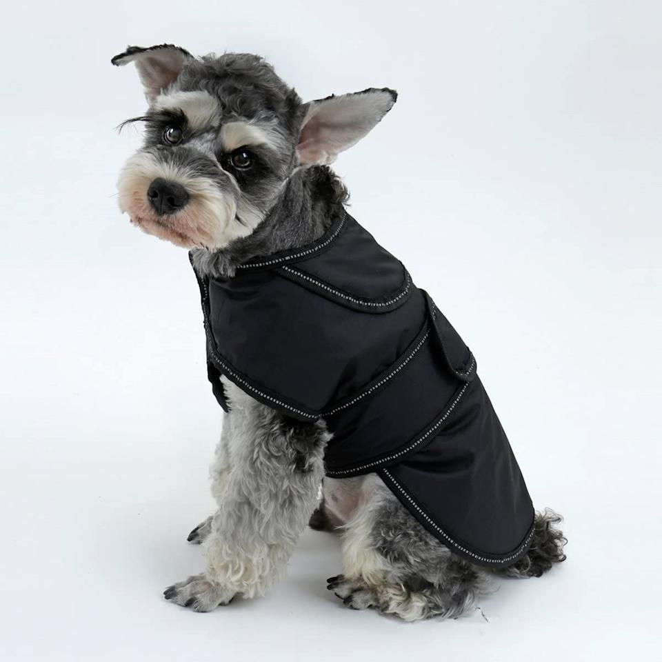 PAWZ Road 2 in 1 Dog Jacket - Available on Amazon.