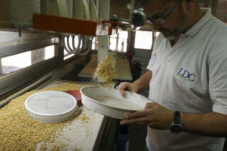A technician collects samples of soybeans for testing at the industrial complex of the Louis Dreyfus Company in General Lagos, Santa Fe province, Argentina on September 13, 2017