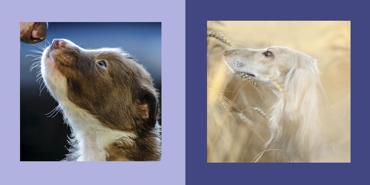"""<p><a href=""""https://www.dogphotographeroftheyear.org.uk/2019-Winners-Gallery/Young-Pup-Photographer-ages-11-and-under/"""" target=""""_blank"""">The Kennel Club</a>'s <em>Dog Photographer of The Year</em> competition has released its stunning winners. From moving photographs of rescue dogs being embraced, to pups enjoying the outdoors, these images are sure to brighten your day. </p><p>Take a look at the various categories... </p>"""