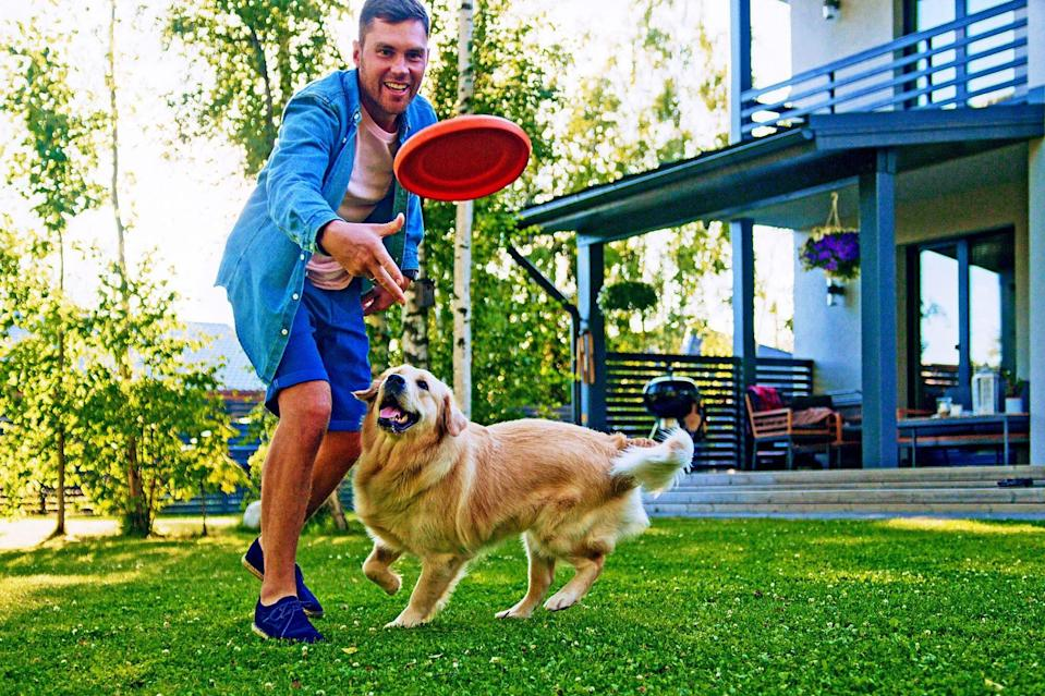 man playing fetch with golden retriever