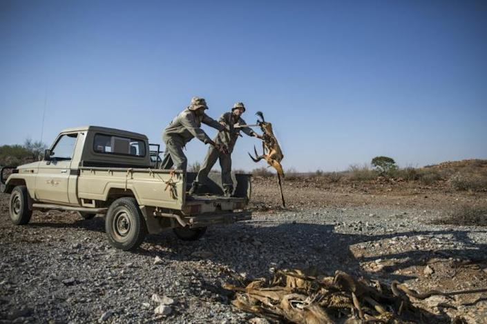 Workers at the game farm dispose of a carcass of a dead animal (AFP Photo/Guillem Sartorio)