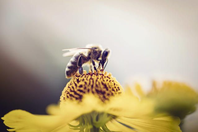 How to support World Bee Day. (Getty Images)