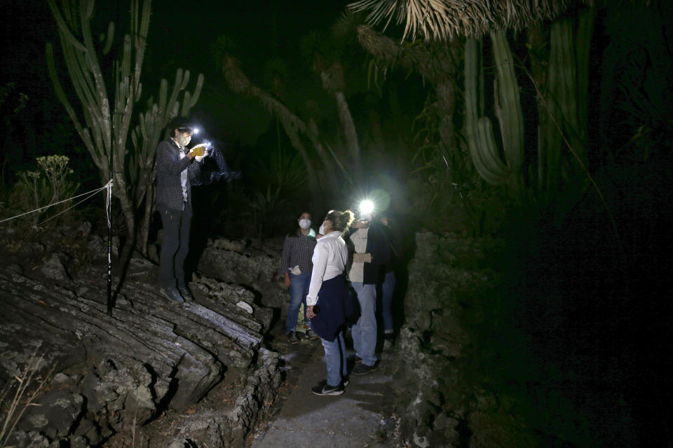 Biologist Rodrigo Medellin and his students from Mexico's National Autonomous University, UNAM, Ecology Institute, gather to briefly capture and release bats at the university's botanical gardens in Mexico City, Tuesday, March 16, 2021. They are hoping to trap the protected Mexican long-tongued bat that was first sighted this year in an even more unlikely location: a zoo at Chapultepec Park. (AP Photo/Marco Ugarte)