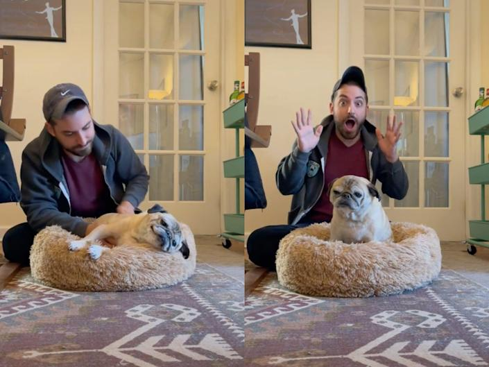 left: a man in a baseball cap and red shirt pets an elderly pug laying in a beige, fluffy dog bed; right: the man with his hands up and an expression of surprise on his face as the dog sits upright in the dog bed